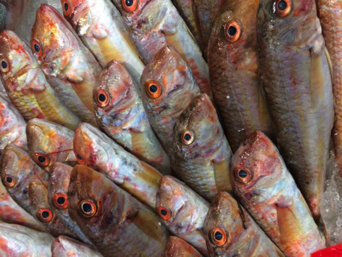 pesce - isq alimenti